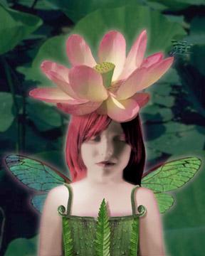Lotus Dreamer