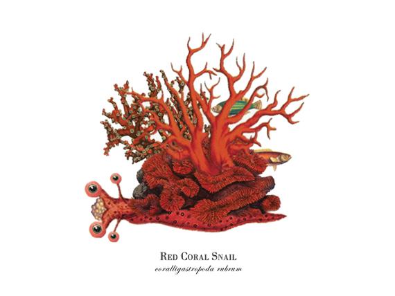 """""""Red Coral Slug"""""""