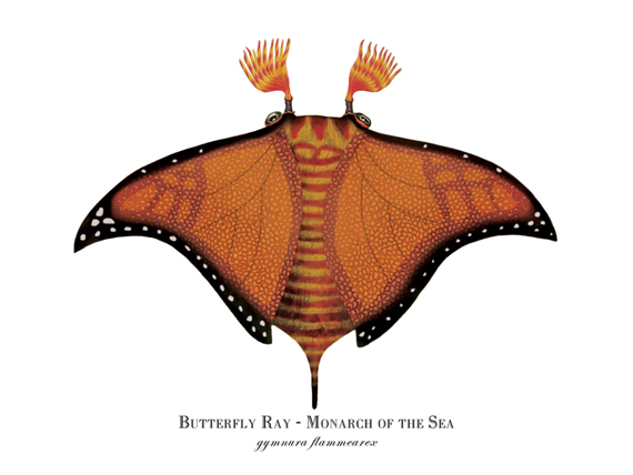 """""""Monarch of the Sea (Butterfly Ray)"""""""