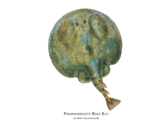 """Phosphorescent Moon Ray"""