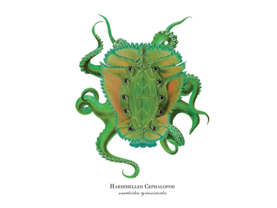 """""""Hardshelled Cephalopod"""""""