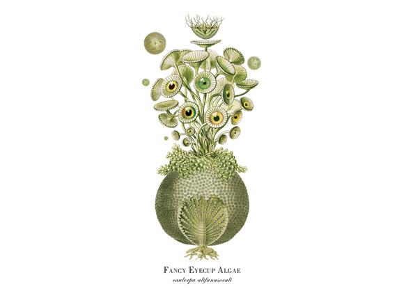 """""""Fancy Eyecup Algae"""""""