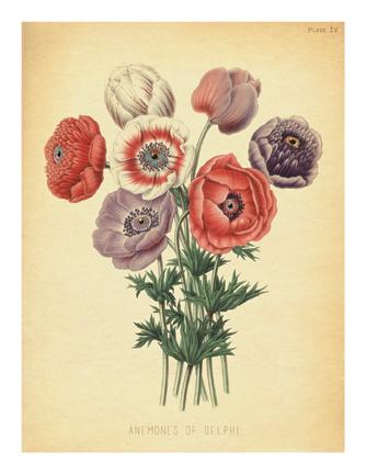 """""""Anemones of Delphi"""""""
