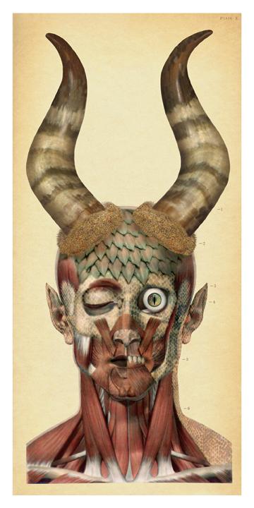 """Demon Anatomy"""