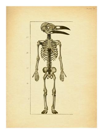 """Crow Baby Skeleton"""