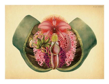"""Lady Garden"" (original version)"
