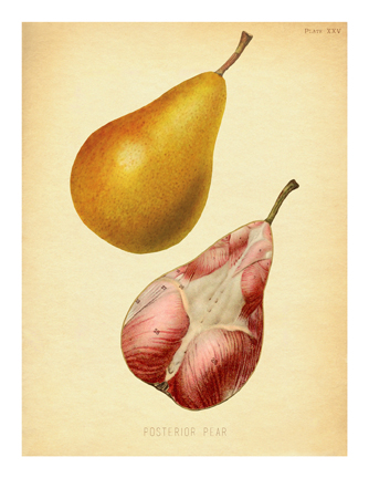"""Posterior Pear"""