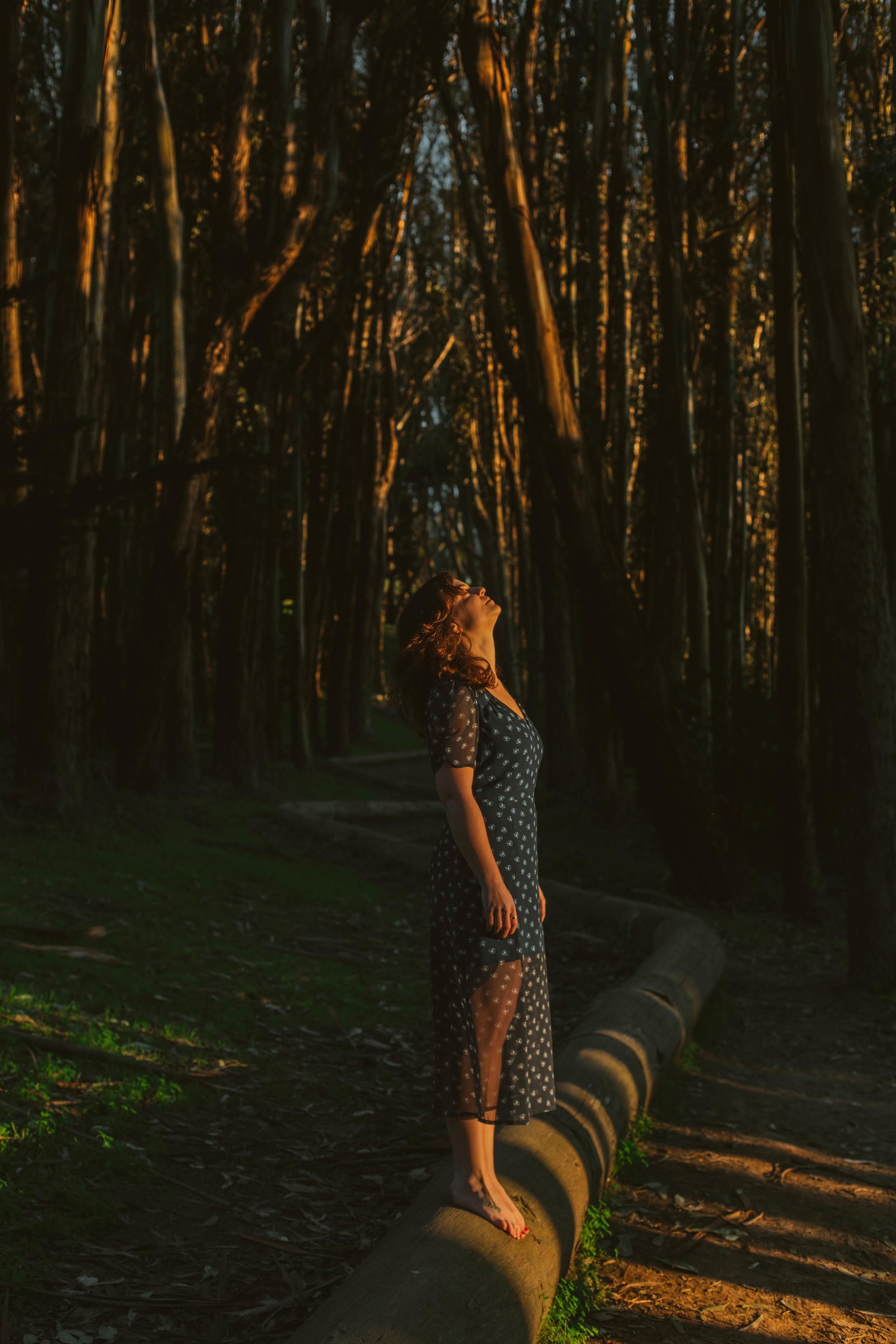 forestsun.jpg
