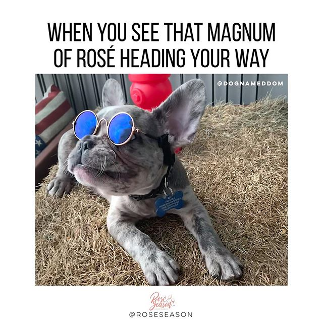 Puppies wearing @rayban knockoffs and magnums of rosé make everyone happy! 🐶🕶 @dognameddom 🌹🍷 #magnummondays #gobigorgohome #dogsbeingbasic #dognameddom #roséseason _____________________________________________________________👫 @sarahbee_6 @4shogan
