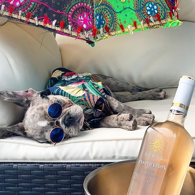 Resting up for the weekend before this awesome puppy party (or should we say PAWty) on Saturday at @toppingrosehouse! 🐾🎉 @inspirationrosewine @puppypartiesnyc @dognameddom  #hamptonspawty #puppyparty #roséallday #roséseason