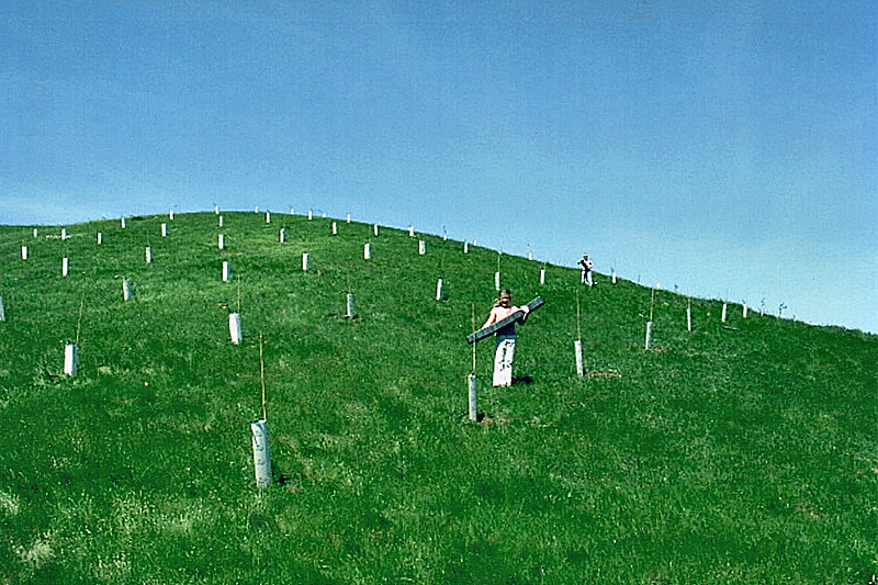 2004 - Orchard newly planted