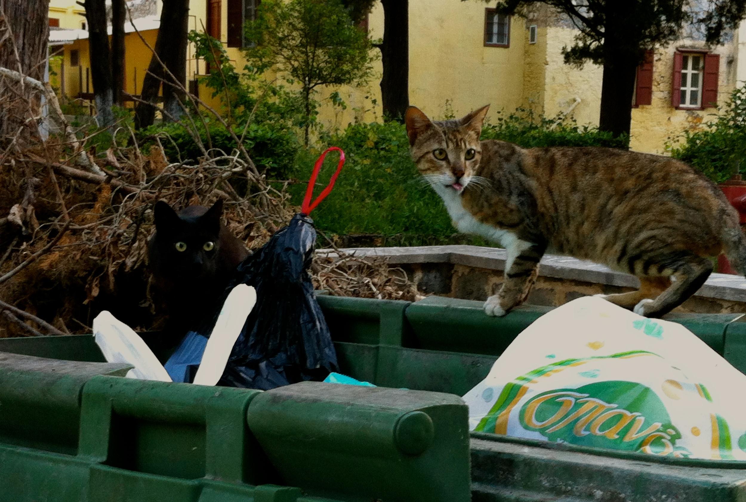 Straycats