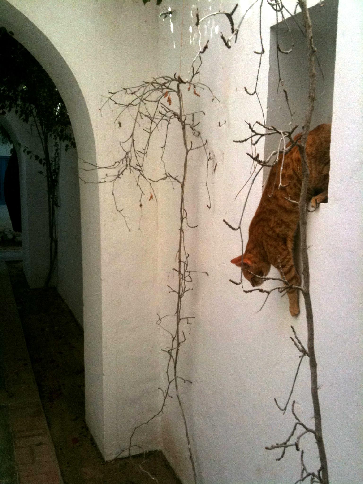Red cat Djerba