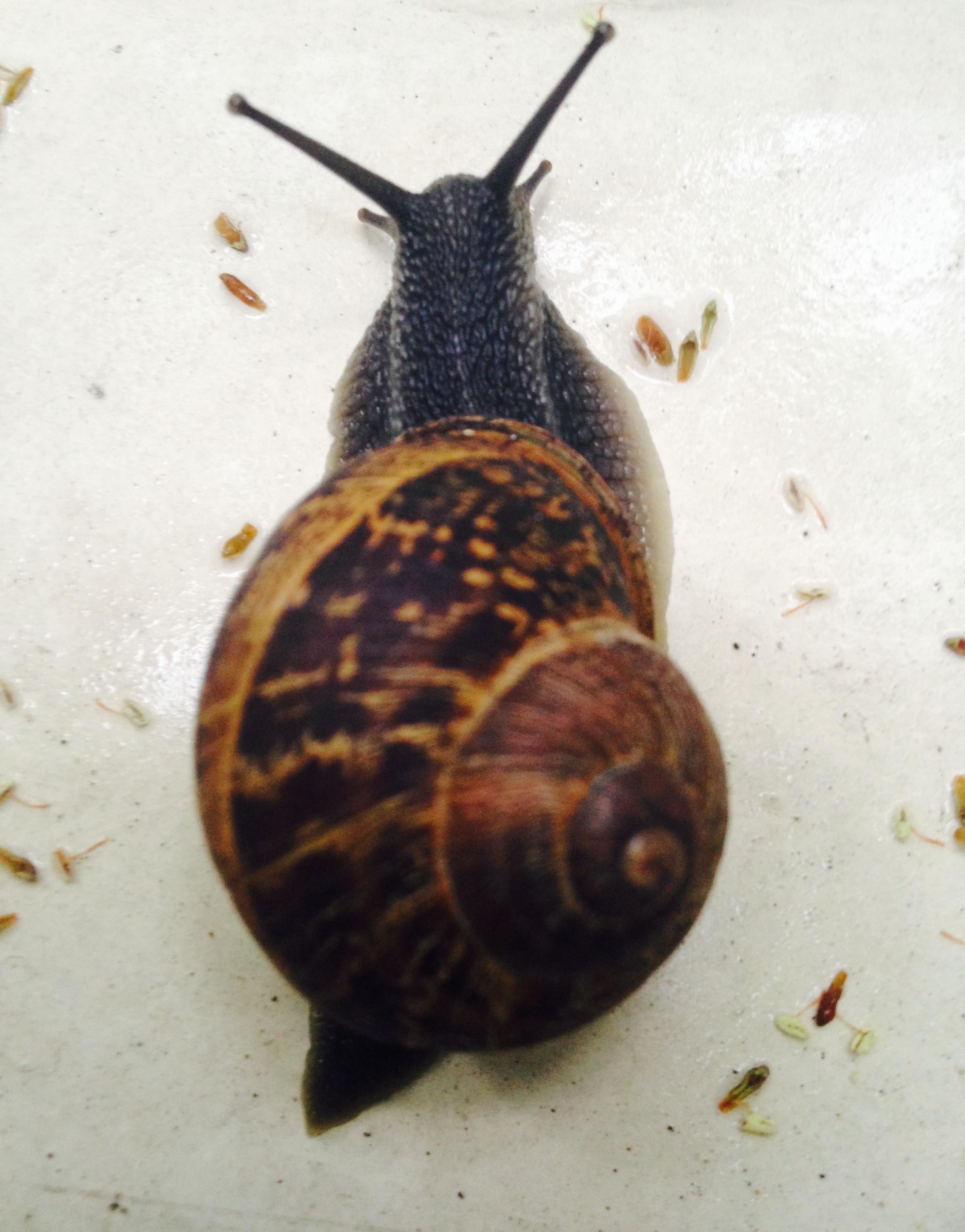 SnailSnail