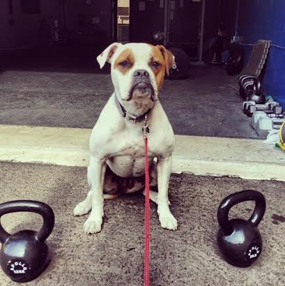 Maggie Moo the After It TrainingMascot