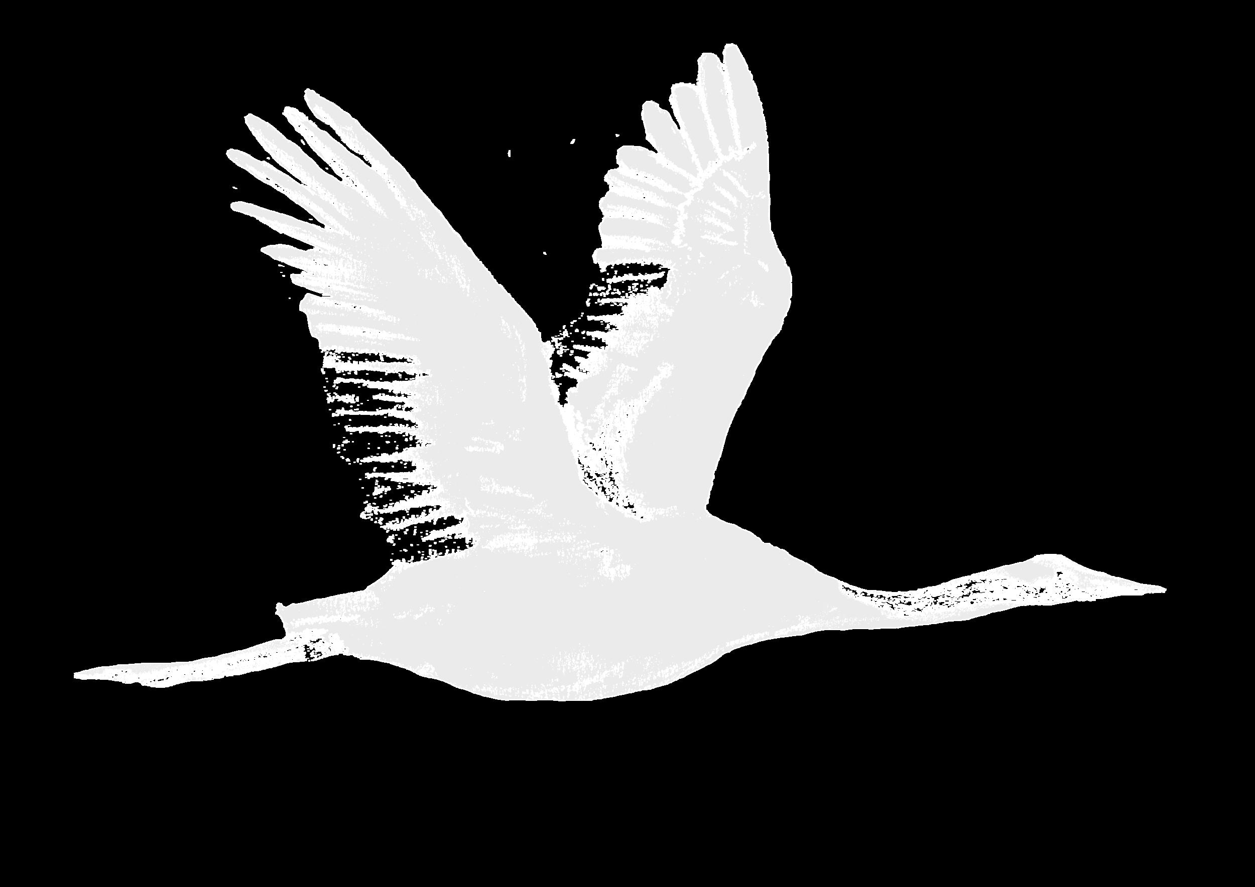 Flying Crane.png
