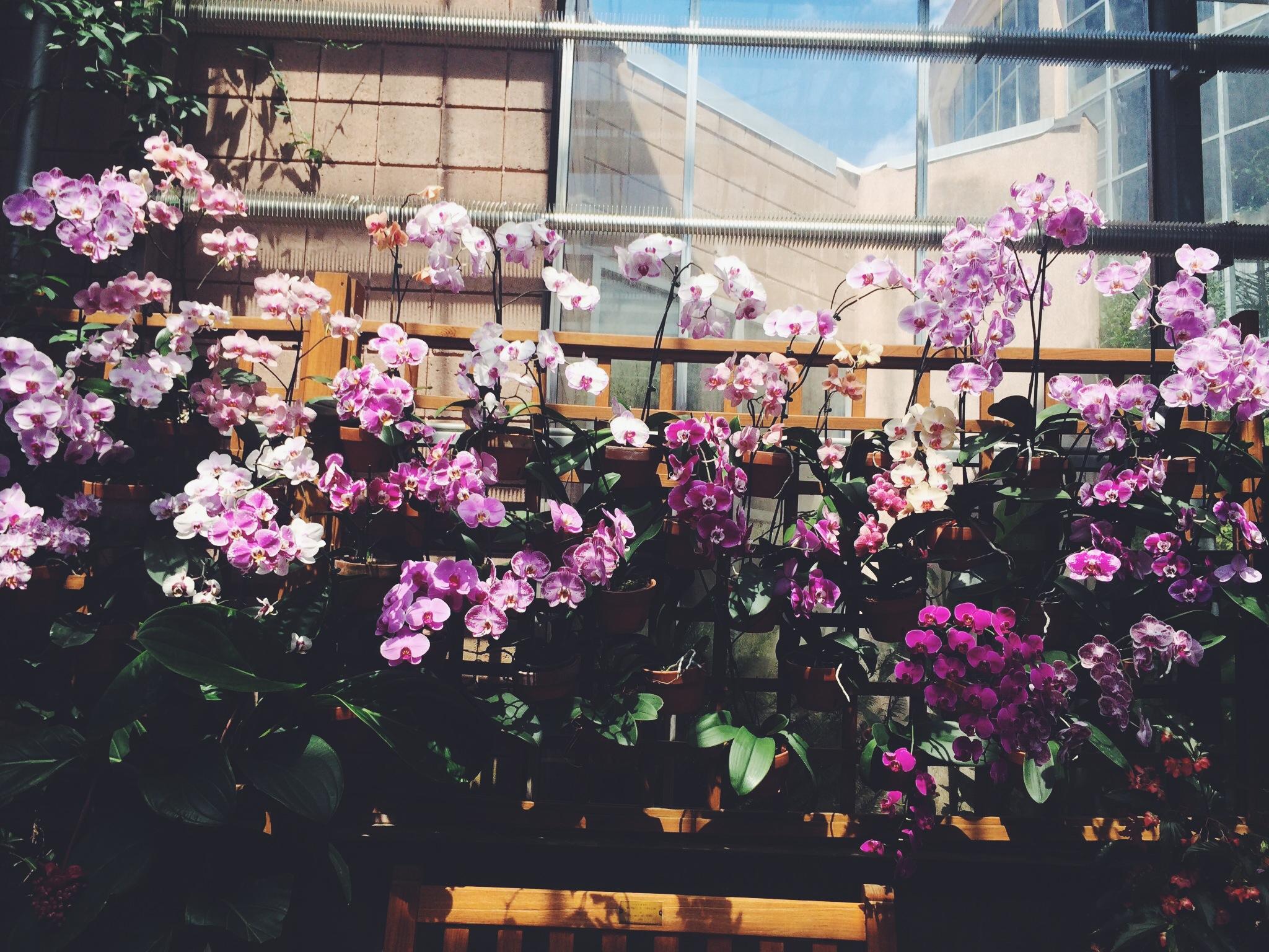 Orchids at the Atlanta Botanical Gardens.