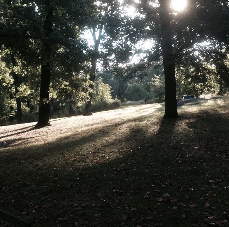 @pjp1717Sun breaking through on a hill in Central Park at West 102nd Street #makingplaceuws