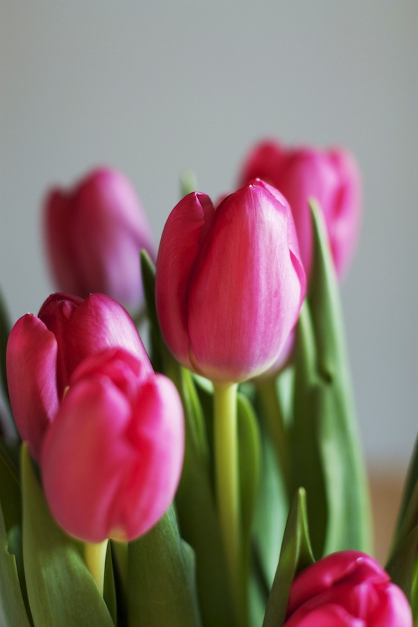 Spring Tulips   Set the Table