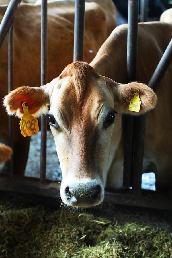 Tillamook Dairy Farm | Set the Table
