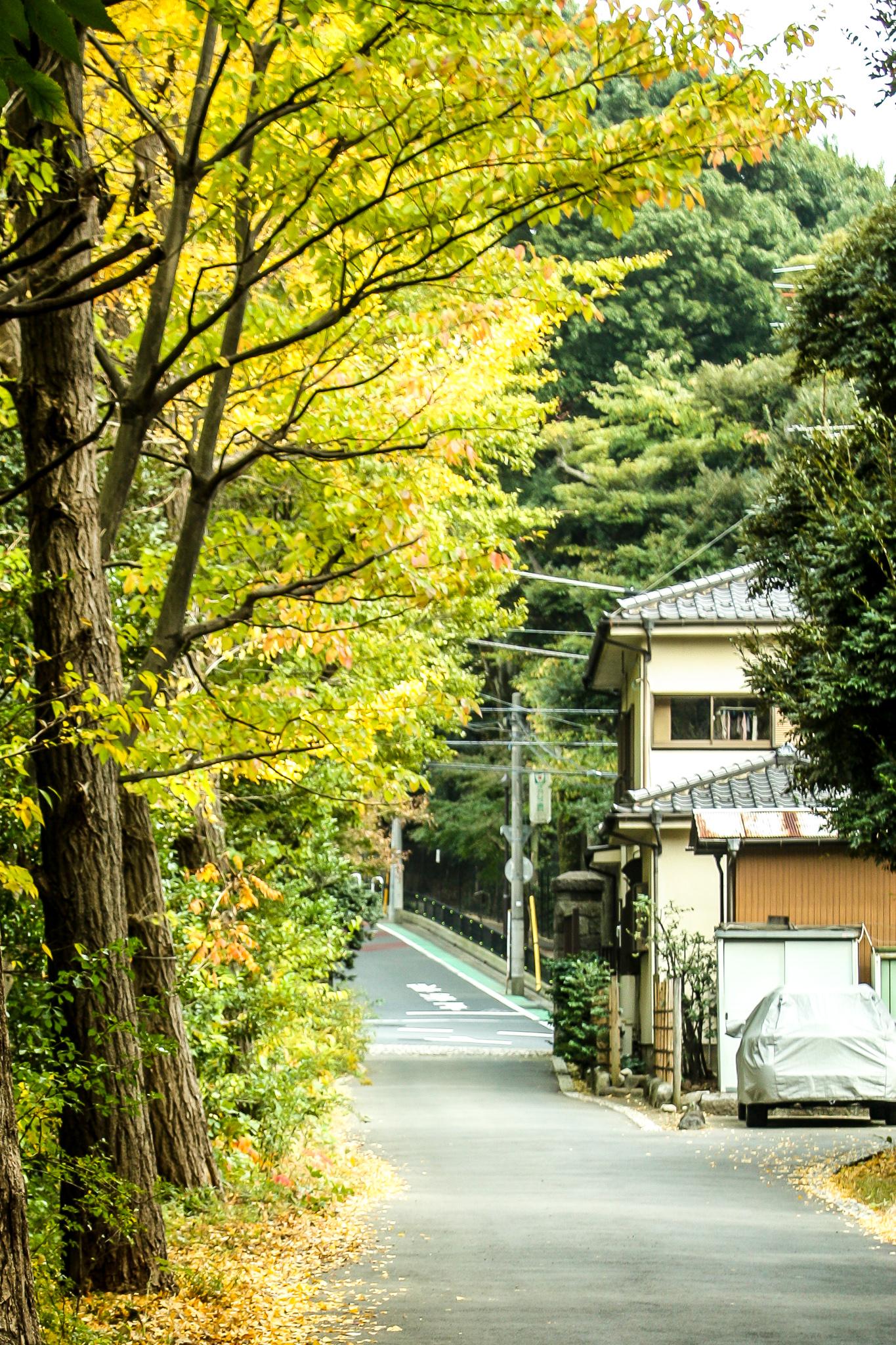 Fall in Japan | Set the Table #gingkotrees #japan #tokyojapan