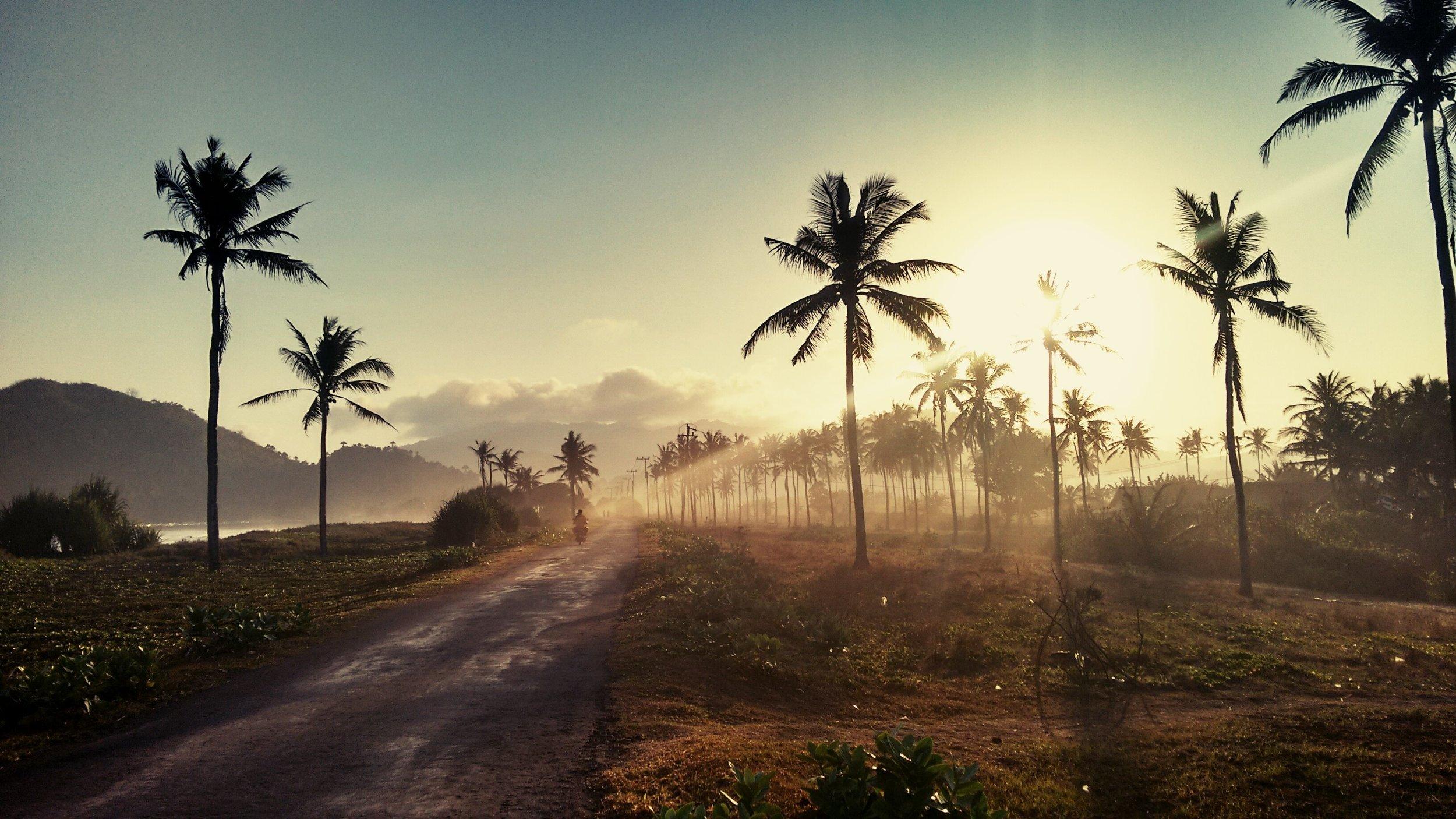 palm tree plantation.jpg