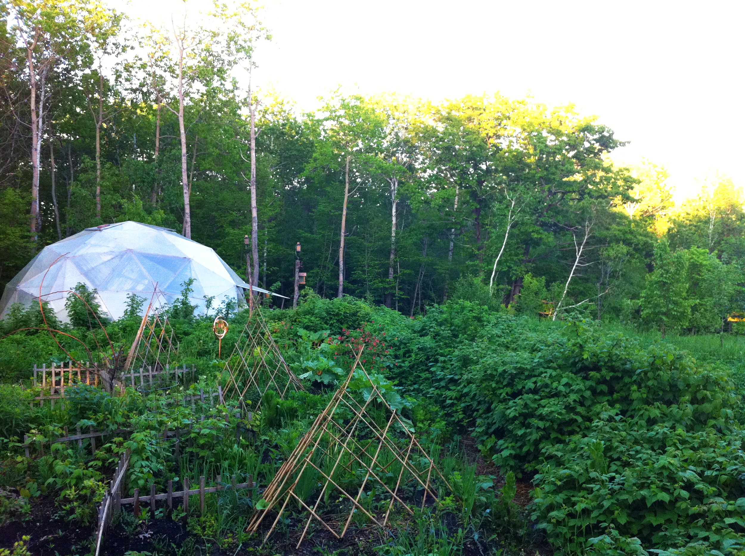 Alexandria, Minnesota  -  A cold climate food forest with a dome greenhouse, bees, a tipi, and a sundeck.