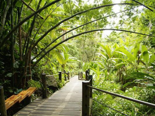 Hilo's Tropical Botanical Gardens