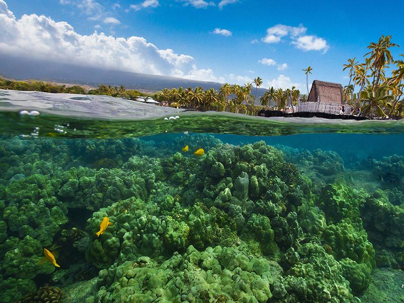 Underwater adventures atHonaunau Bay