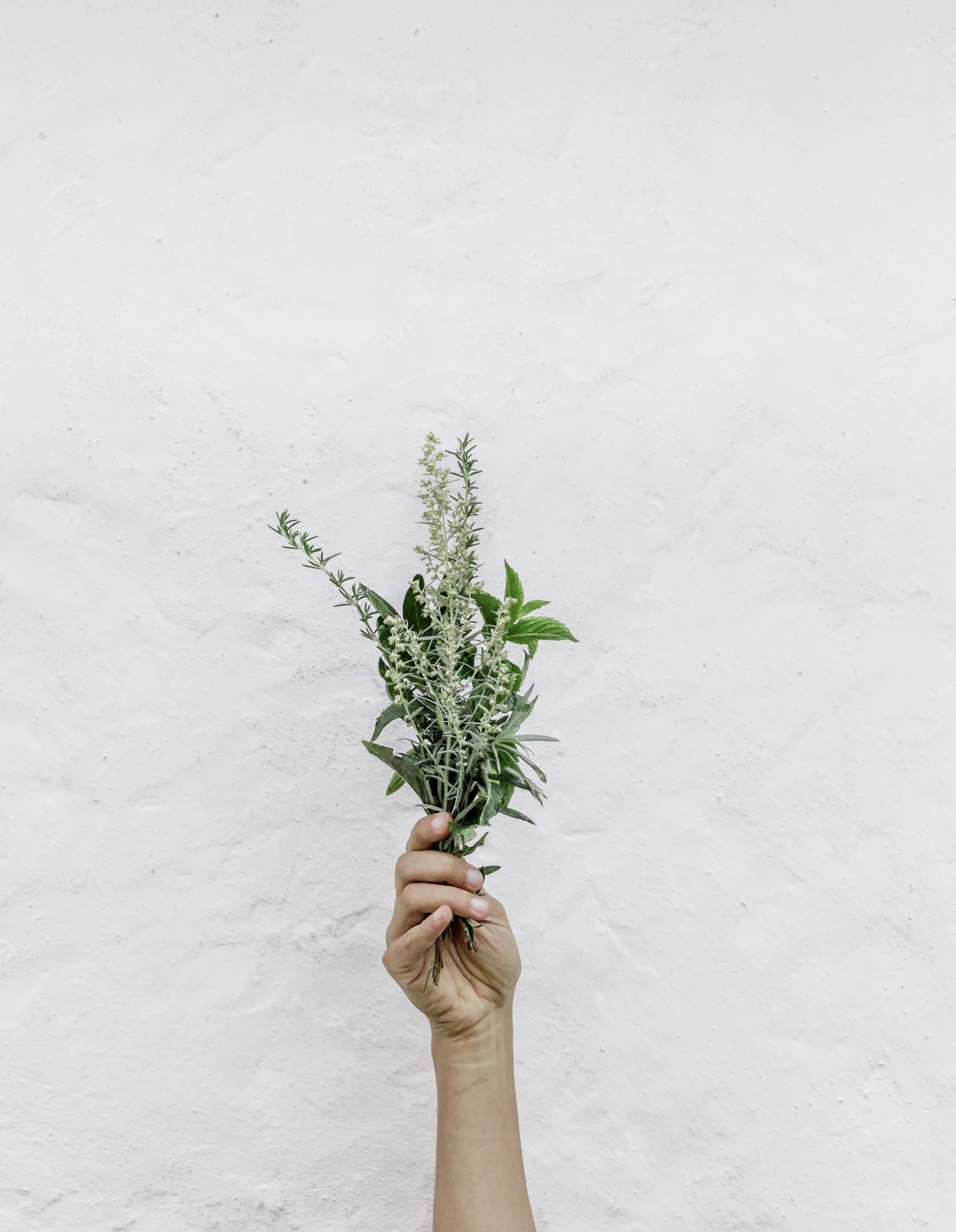 herbalism pic hand with herbs CROPPED.jpg
