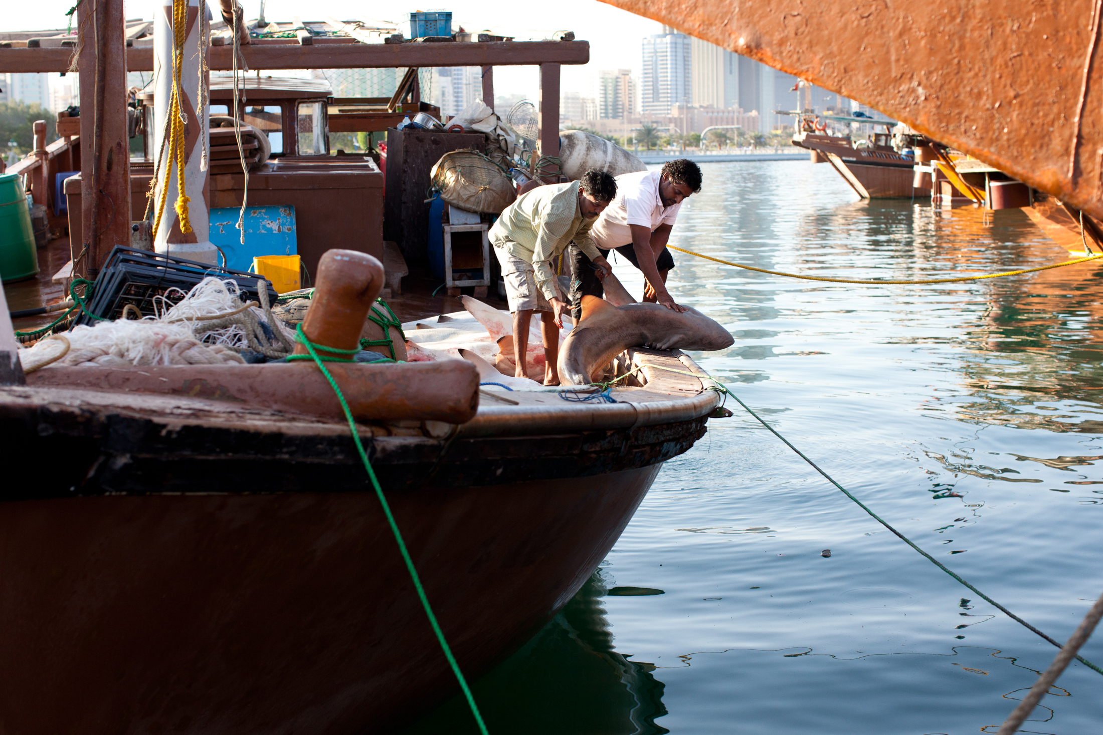shark-fisherman-abu-dhabi-002.jpg