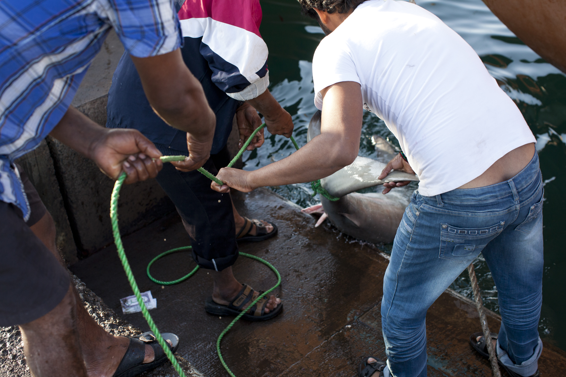 shark fishing, endagered species, abu dhabi, fisherman, illegal fishing-027.jpg
