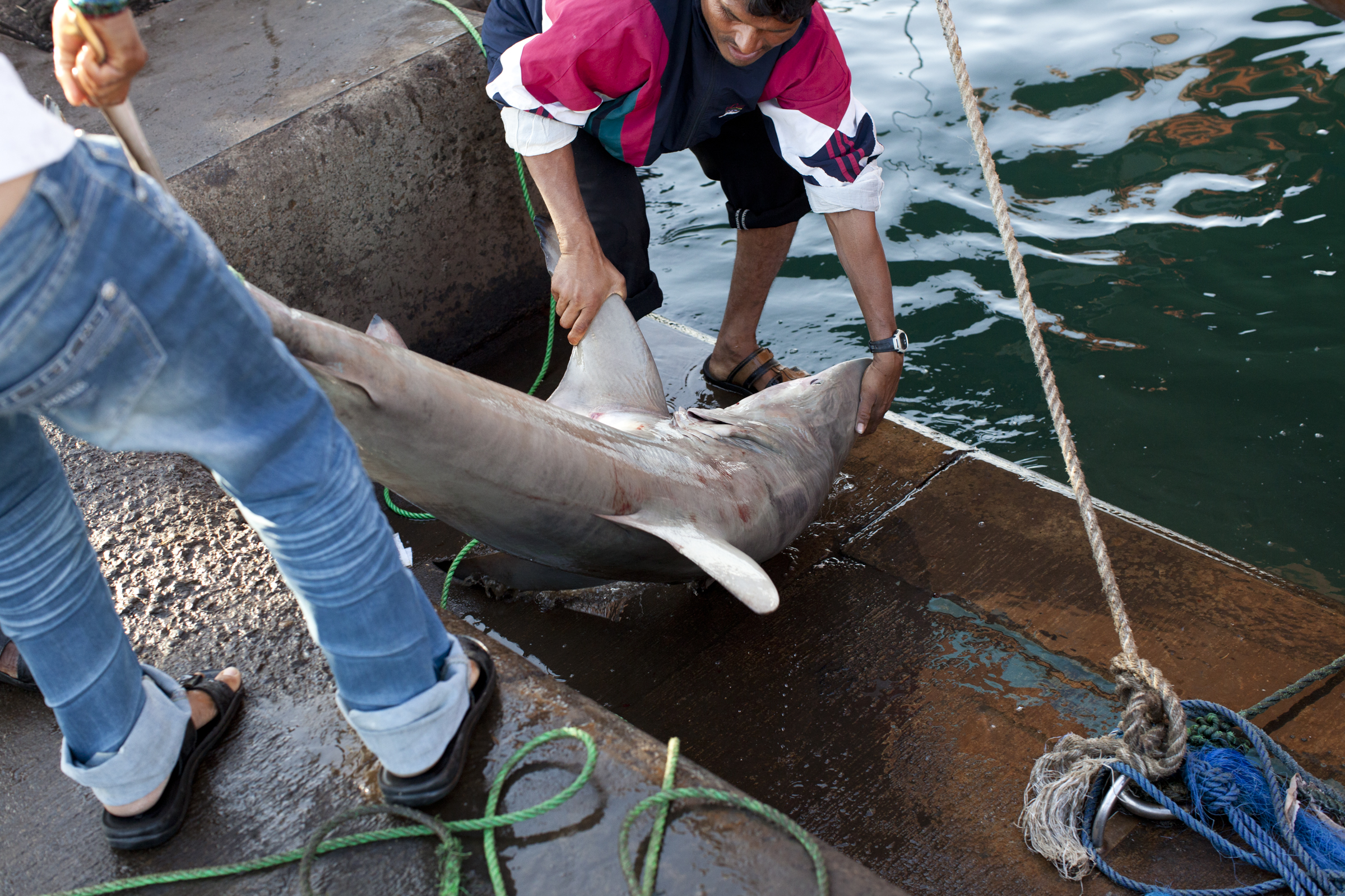 shark fishing, endagered species, abu dhabi, fisherman, illegal fishing-028.jpg