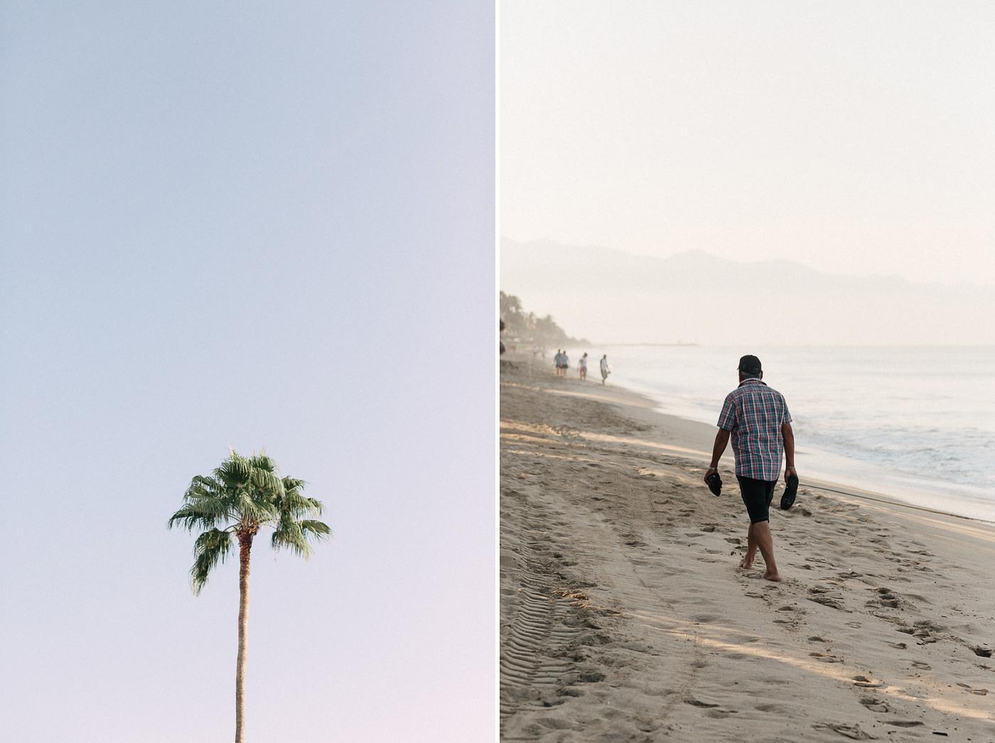 172-puerto-vallarta-palm-tree.jpg