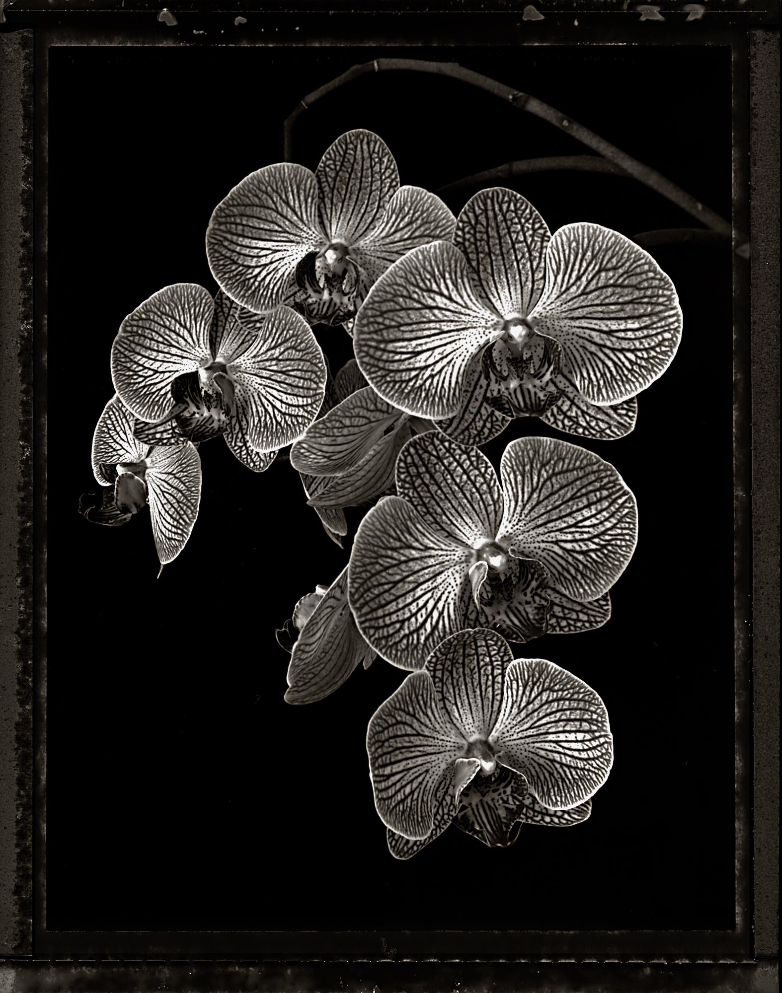 Orchid-7.jpg