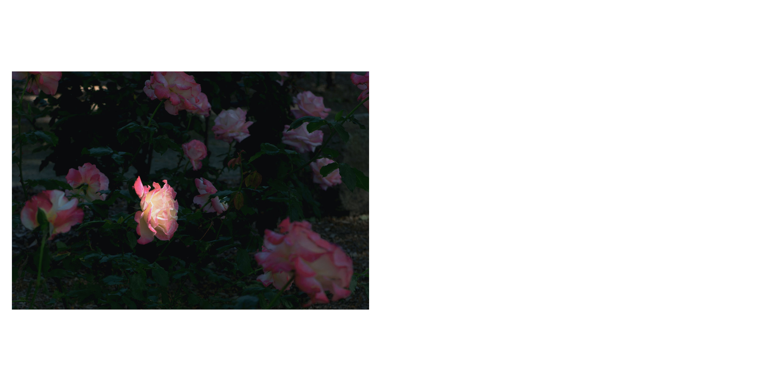 Untitled-611.jpg