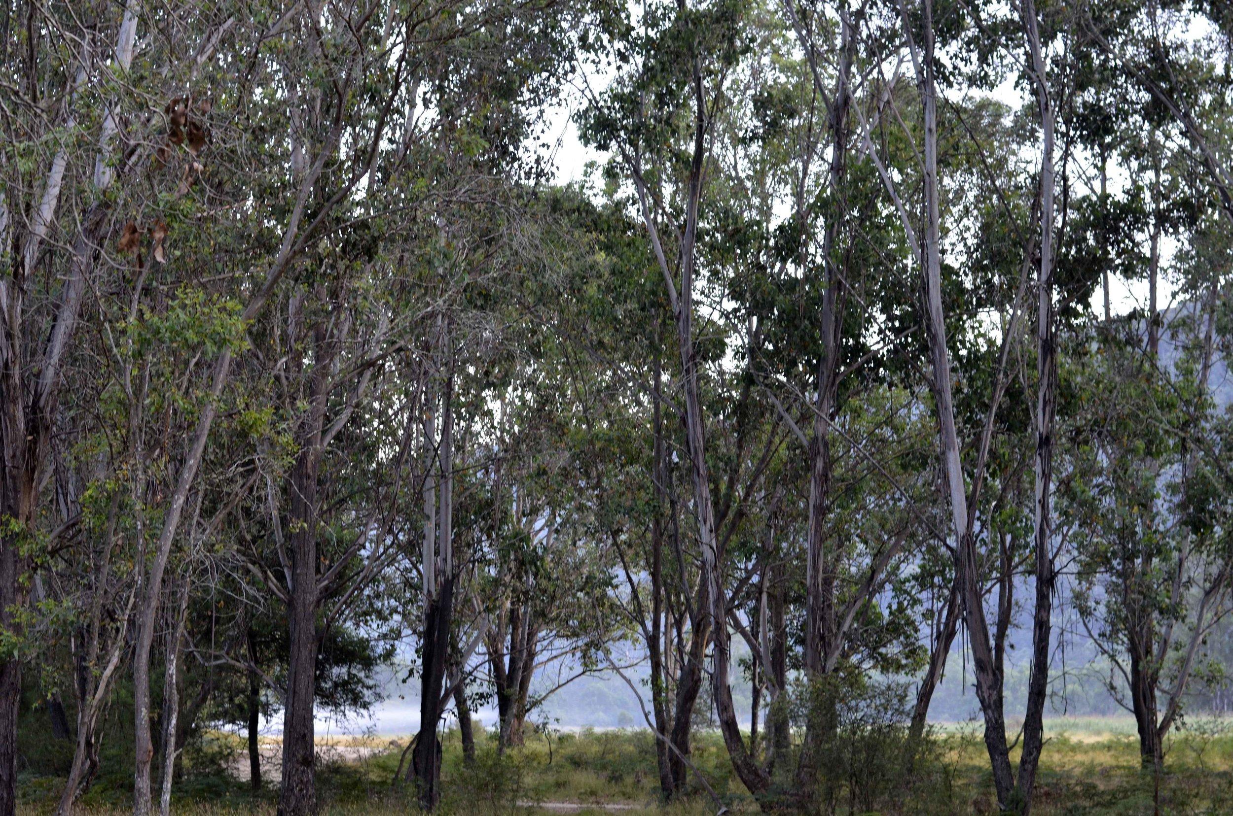 Geehi River Flats Kosciusko Nat Park