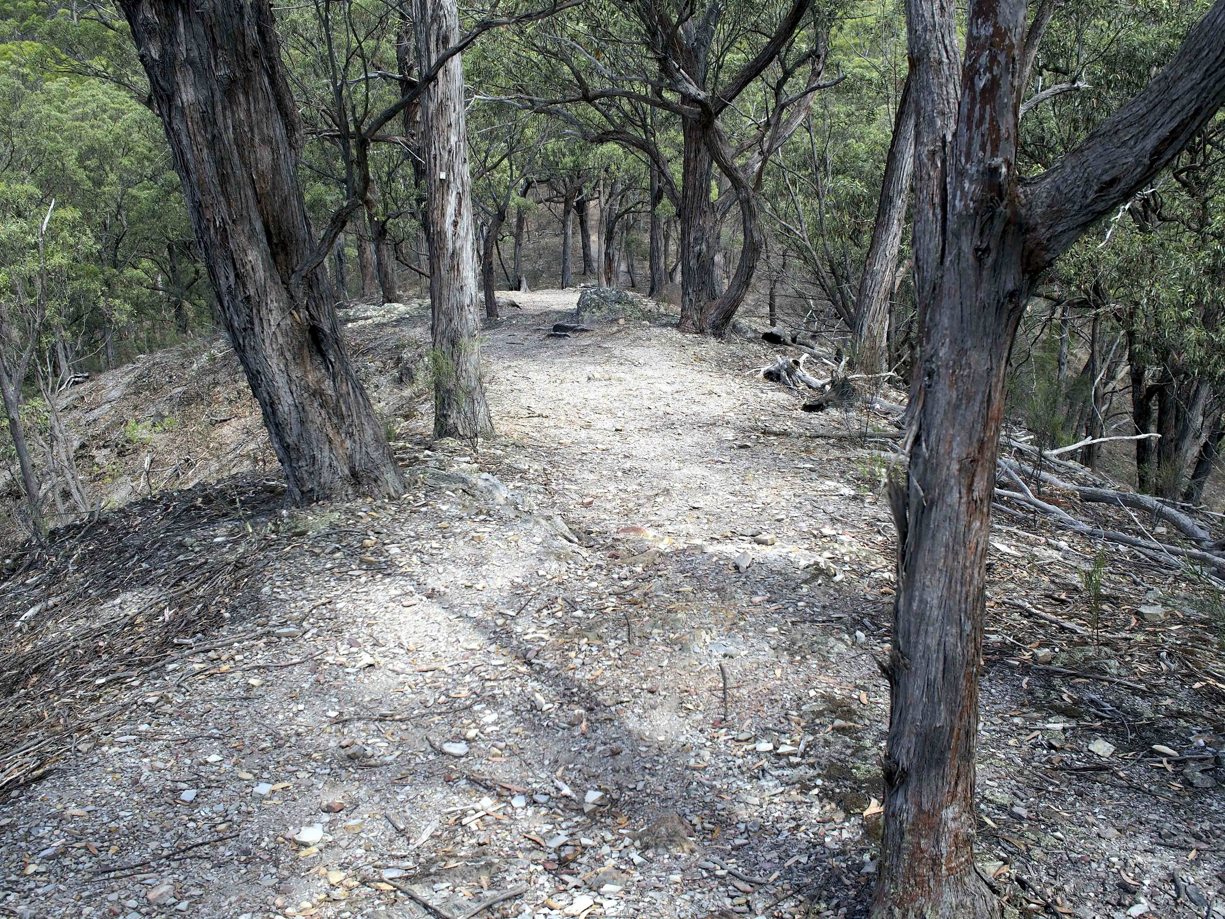 Beautiful tracks out to the lookouts. I saw a lyrebird on this walk, the camera was tucked away in backpack :-(