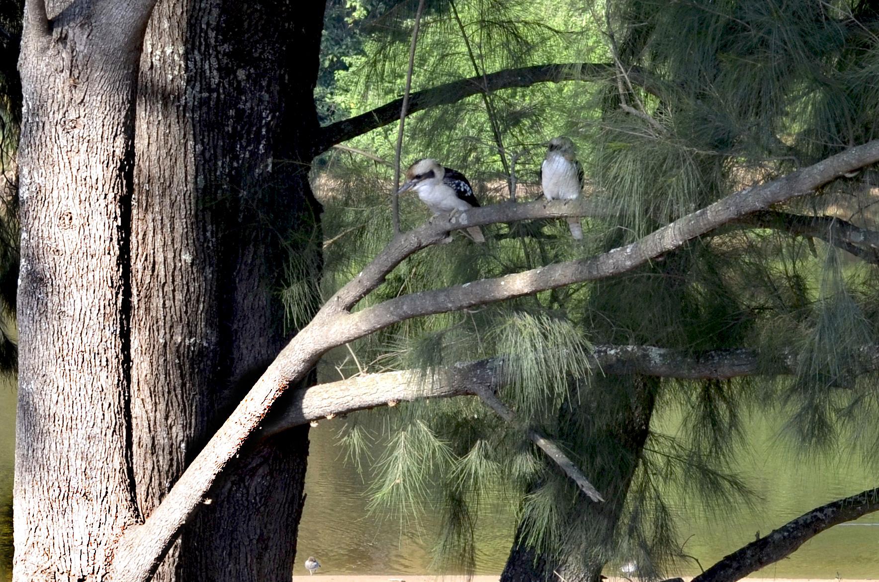 under the watchful eye…