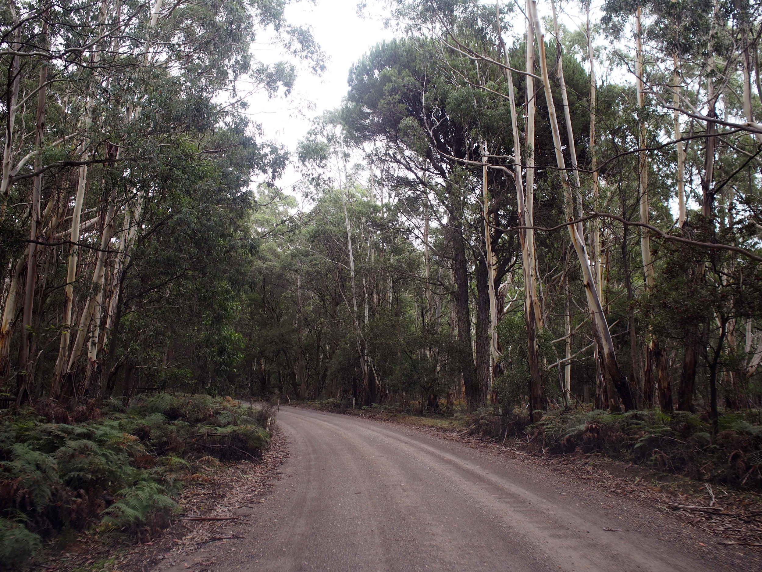 Road into Wombeyan Karst Conservation Reserve