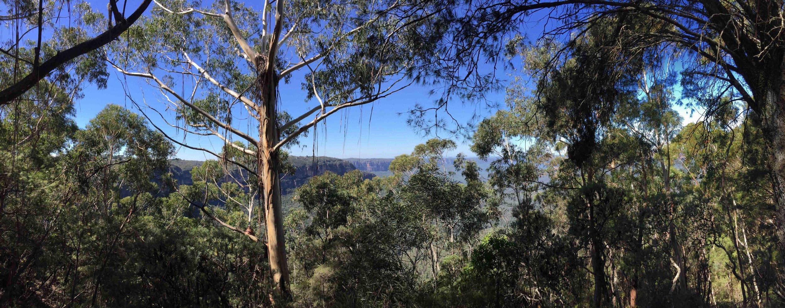 Honeymoon Lookout - Cliff Drive