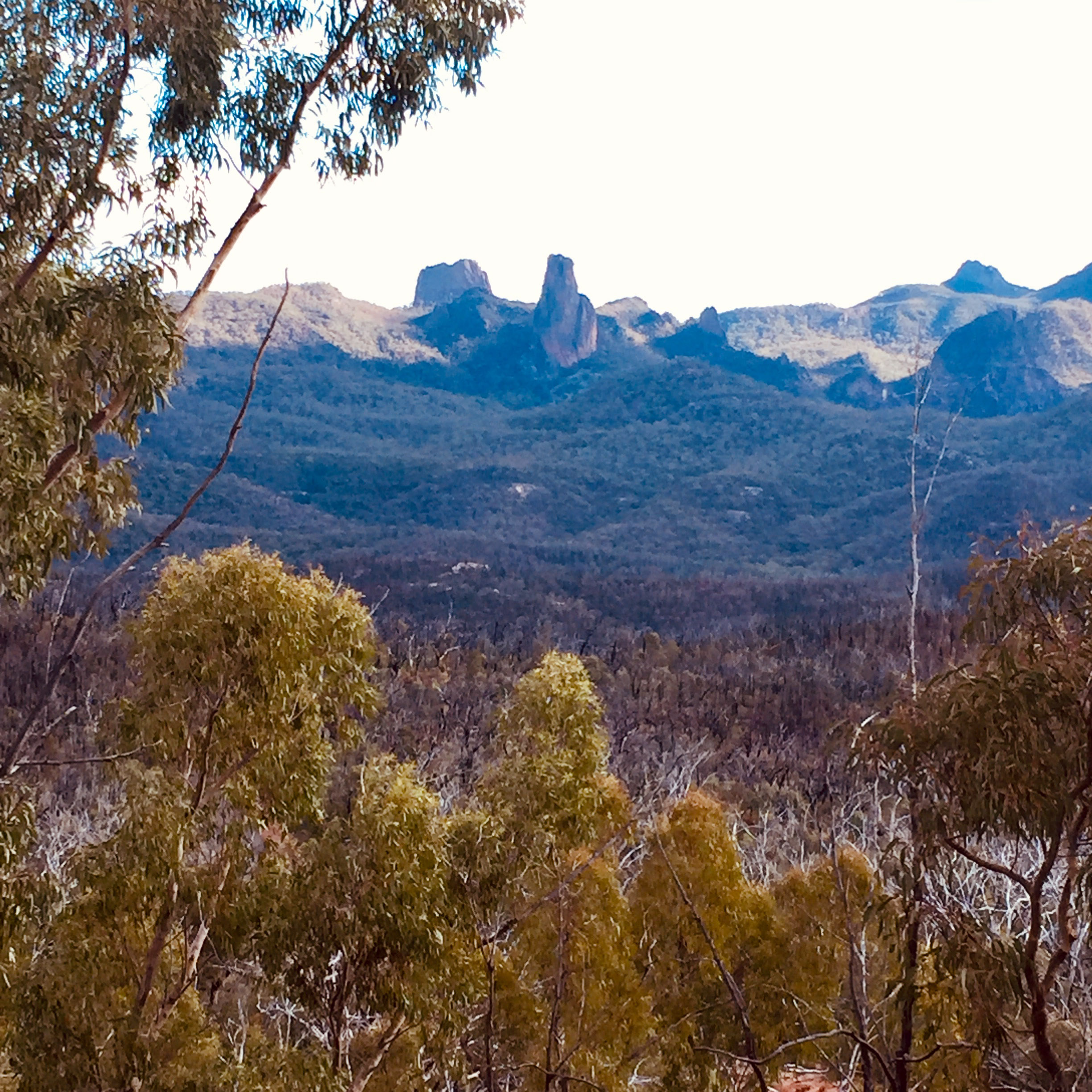 White Gum Lookout.