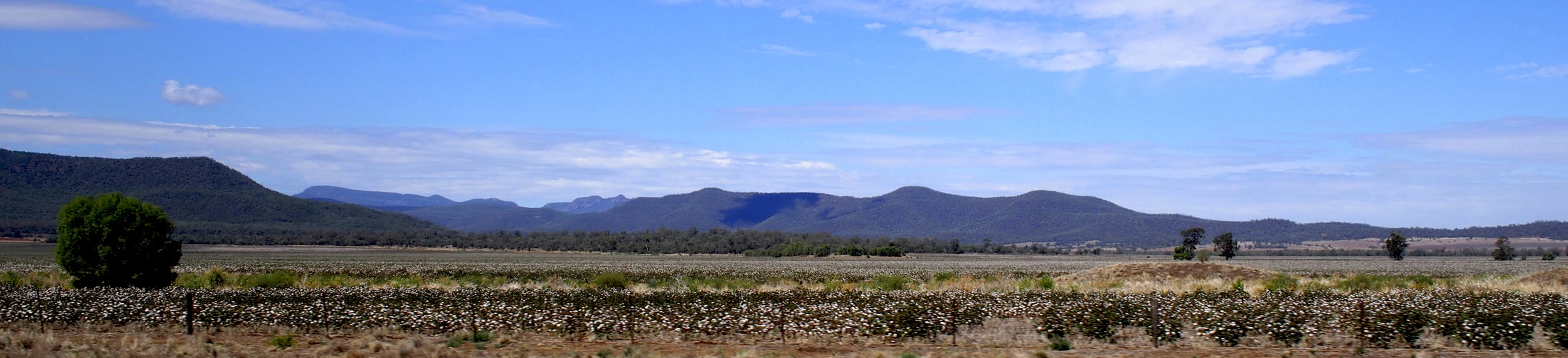 Kaputar National Park with cotton plantations