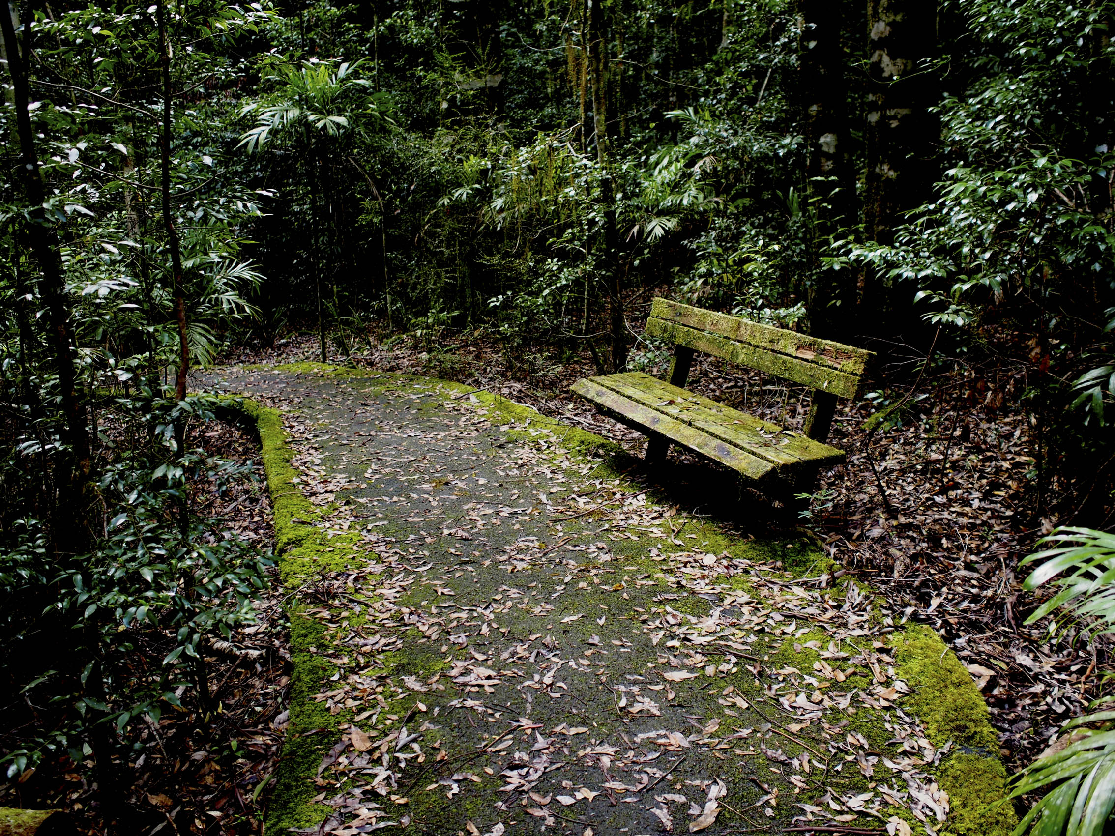 walking track with seat.jpg