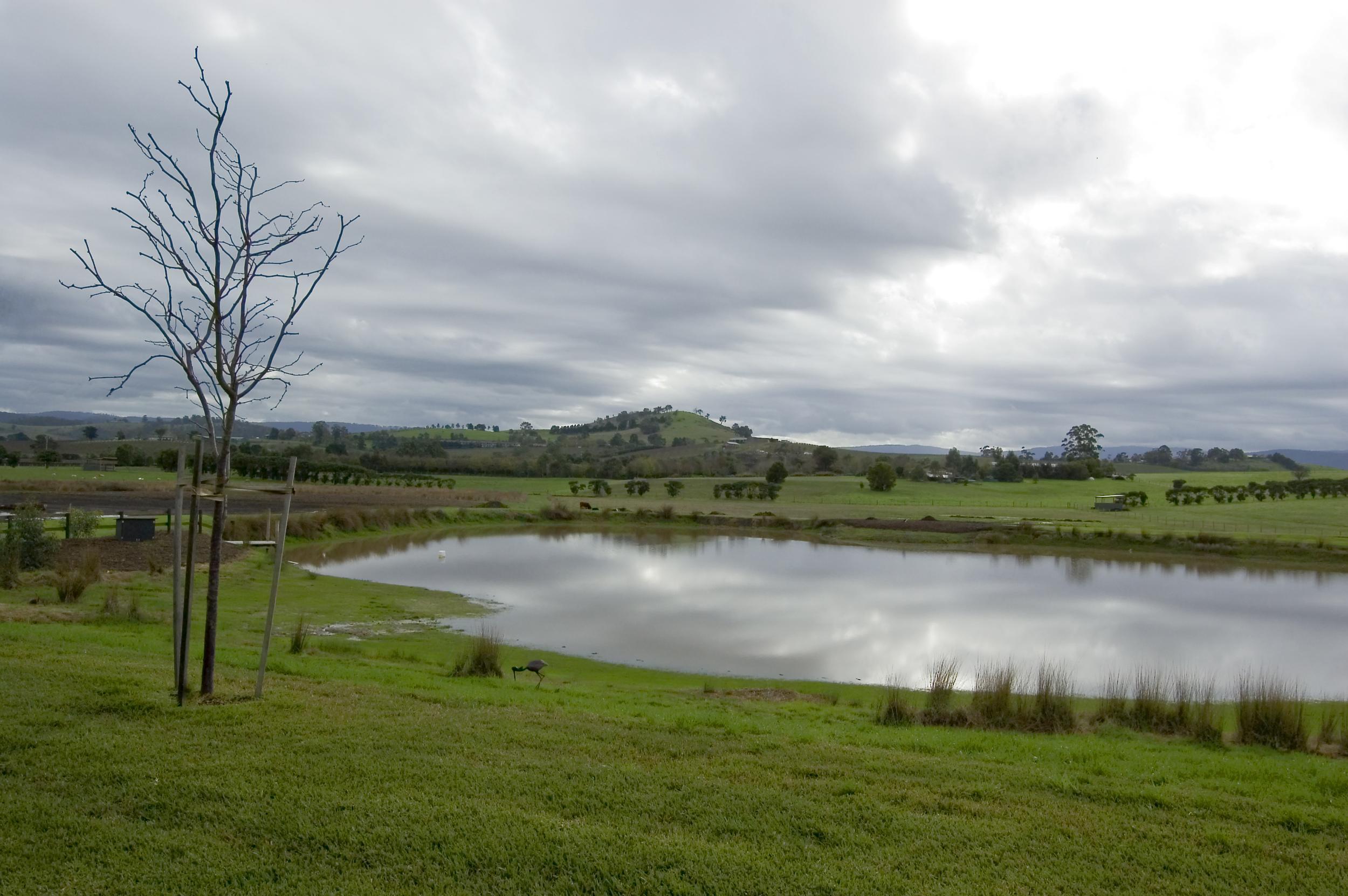 Lake View - Stillness by the lake