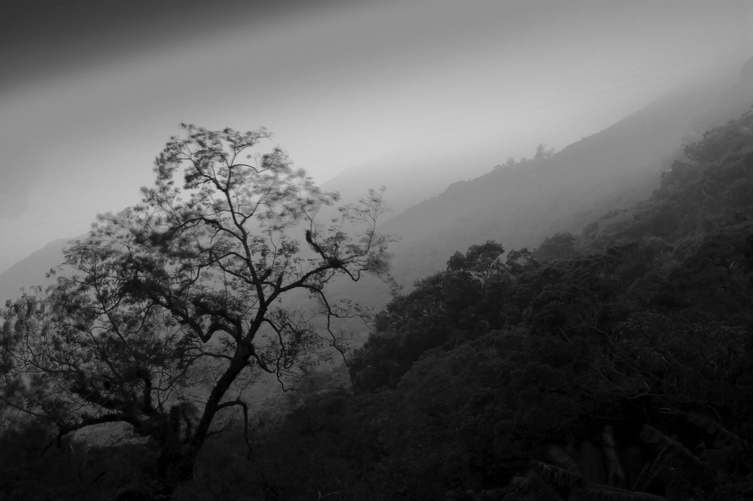 The Foggy Peak