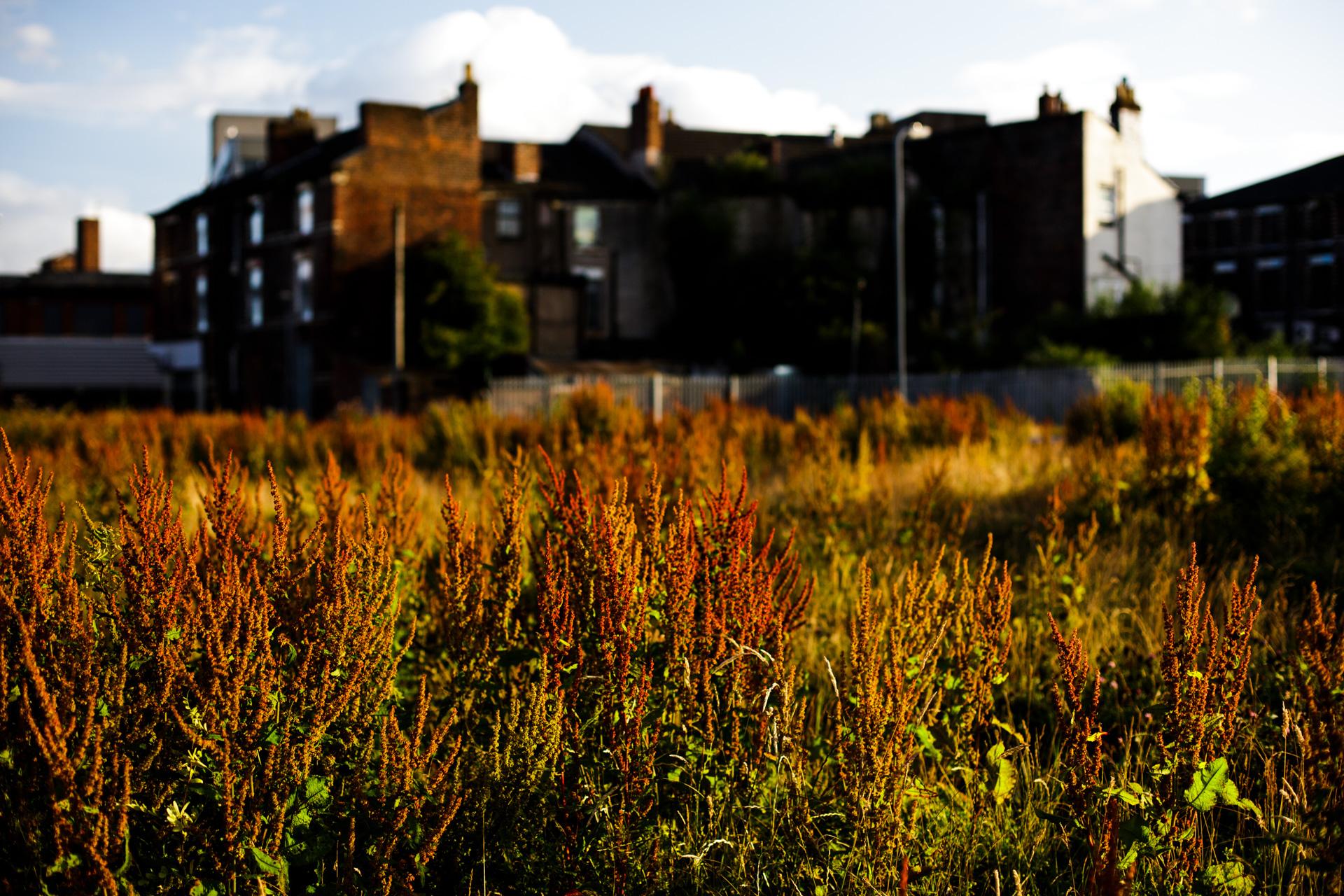 Andrew Wilson Photography Wavertree Liverpool (16).jpg