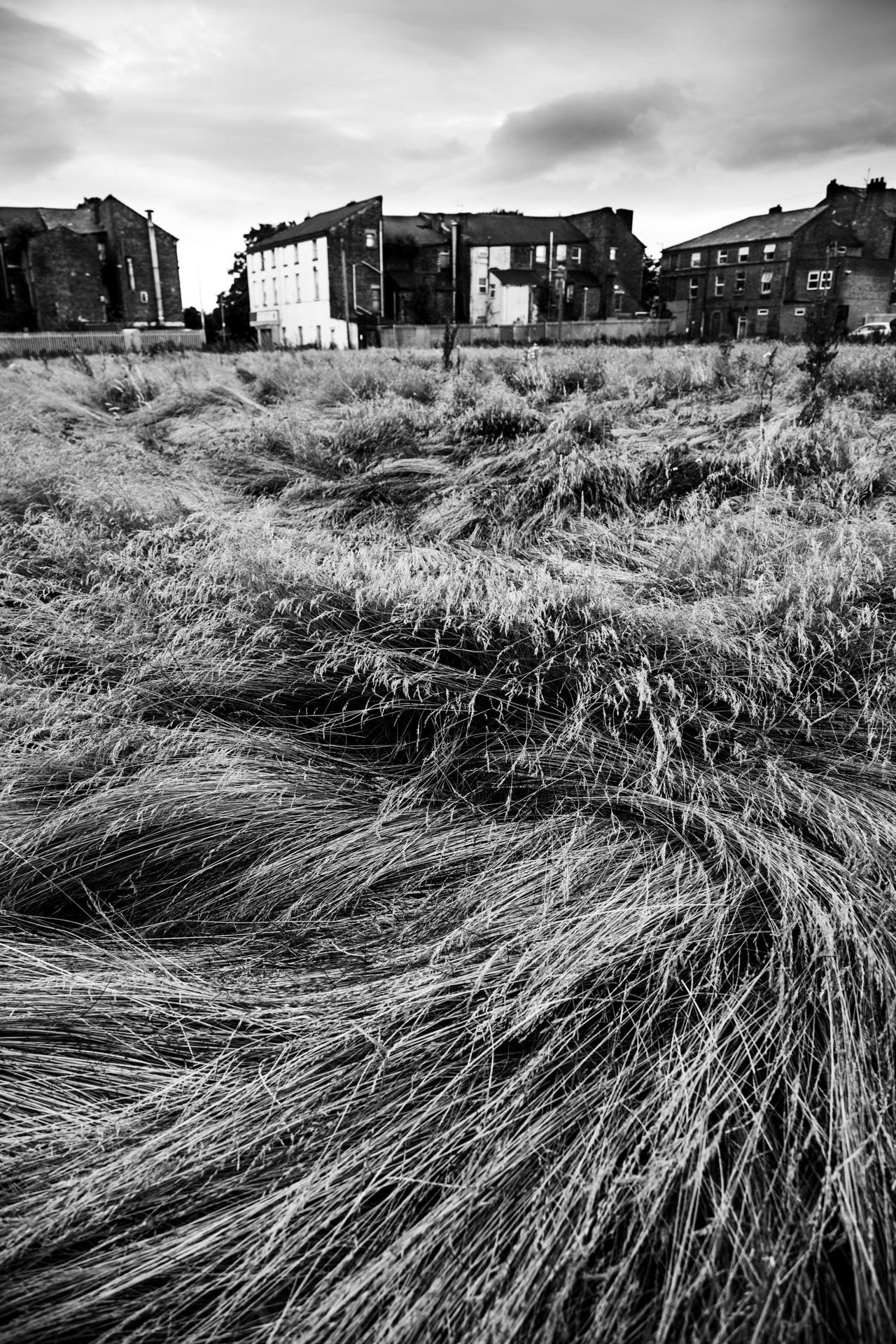 Andrew Wilson Photography Wavertree Liverpool (28).jpg