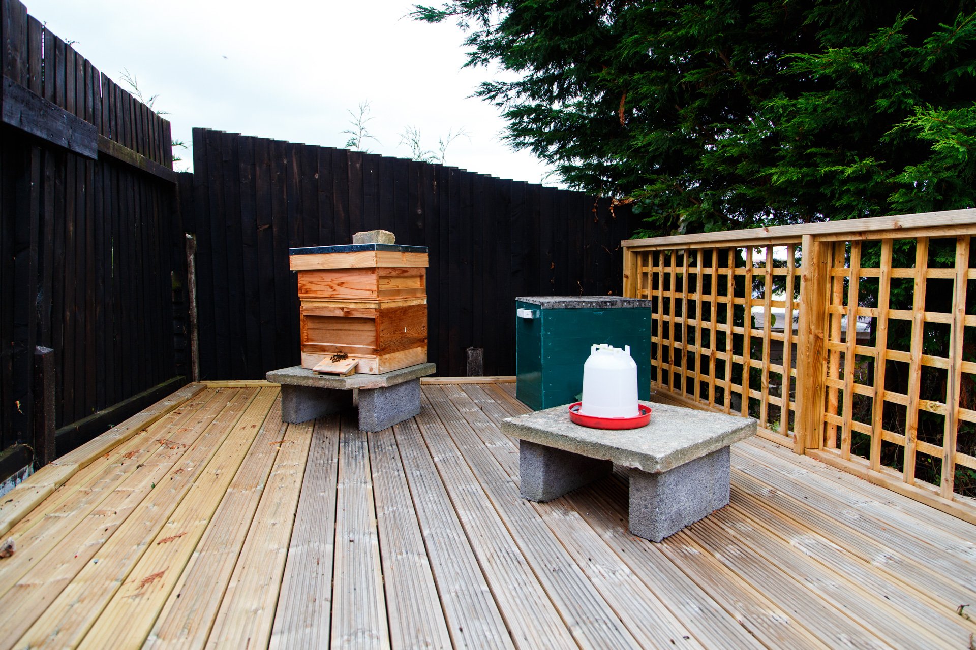 The hive (left) alongside a green storage box/workspace and a jug with a shallow water supply for the bees (if needed).