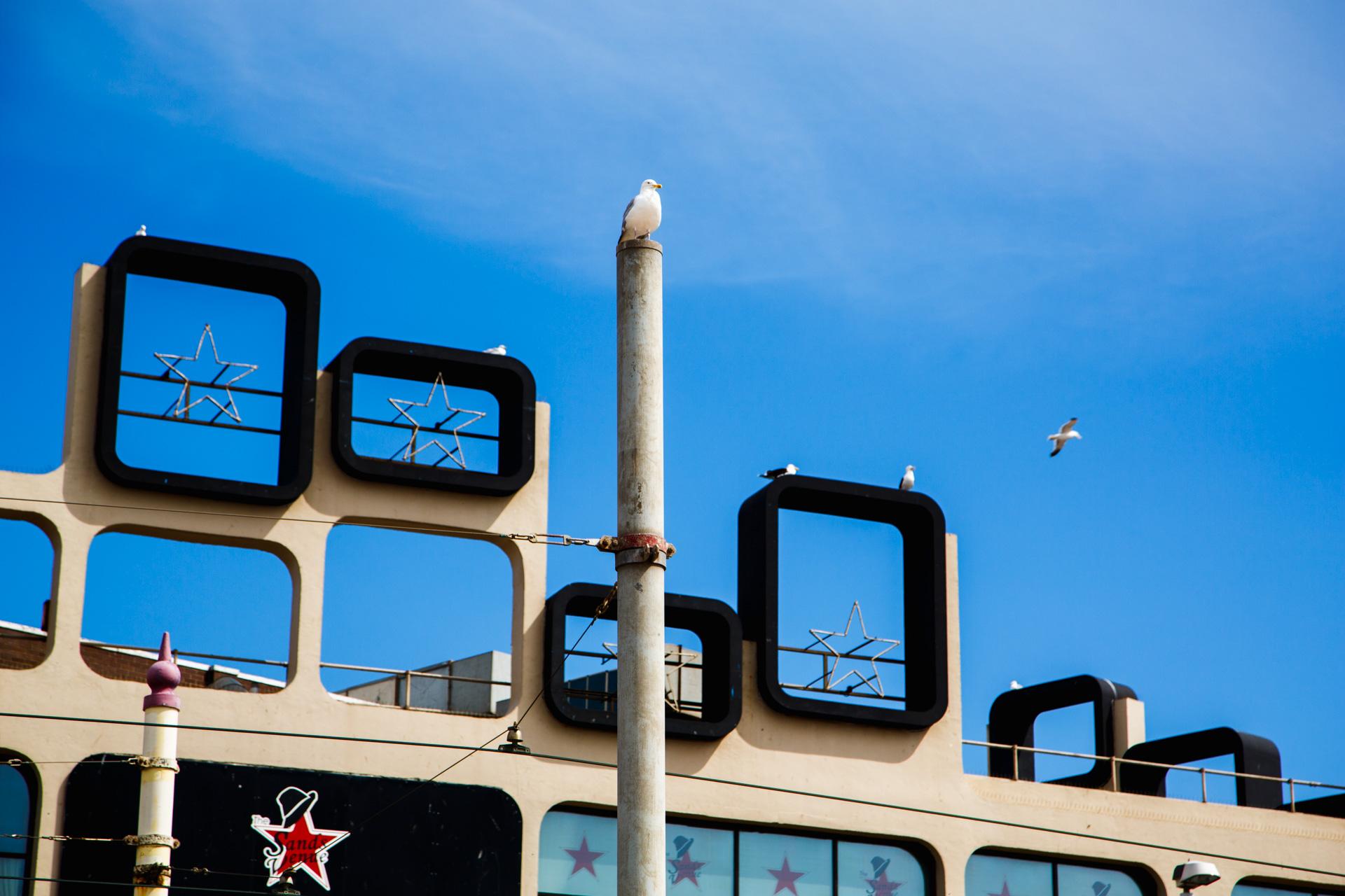 Andrew Wilson Photography Blackpool (20) Seagull.jpg